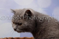 M&N Photography -DSC_6976