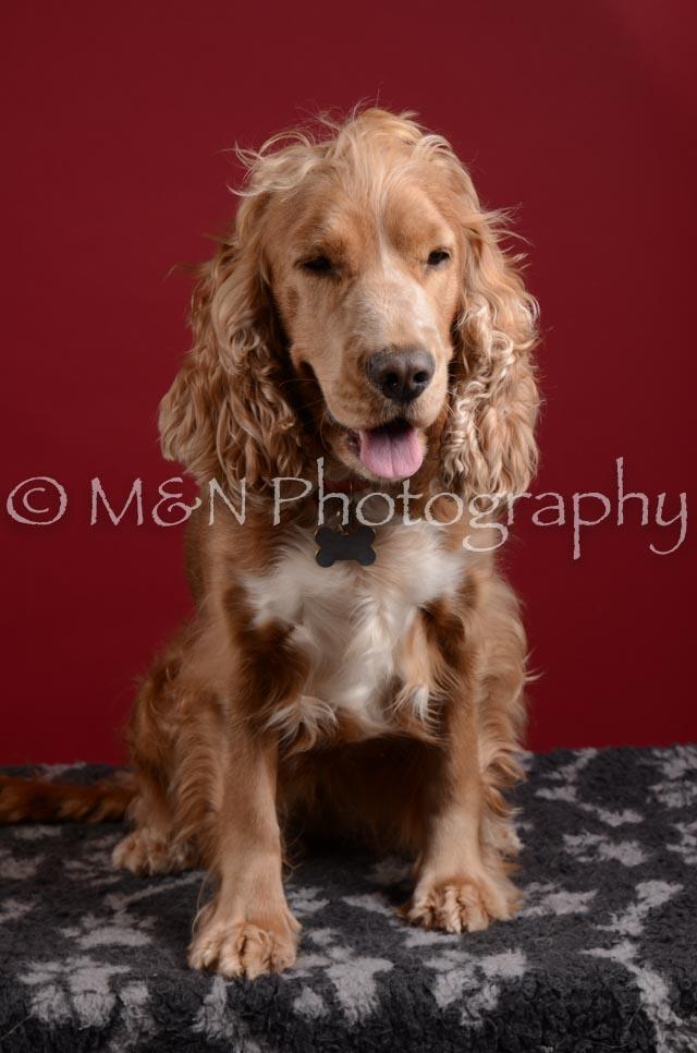 M&N Photography -DSC_3221