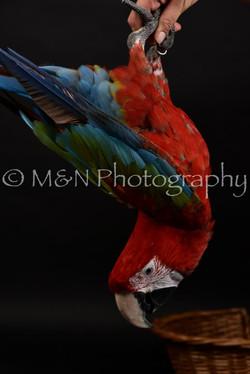 M&N Photography -DSC_2697