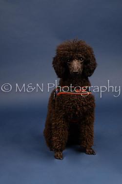 M&N Photography -DSC_3966