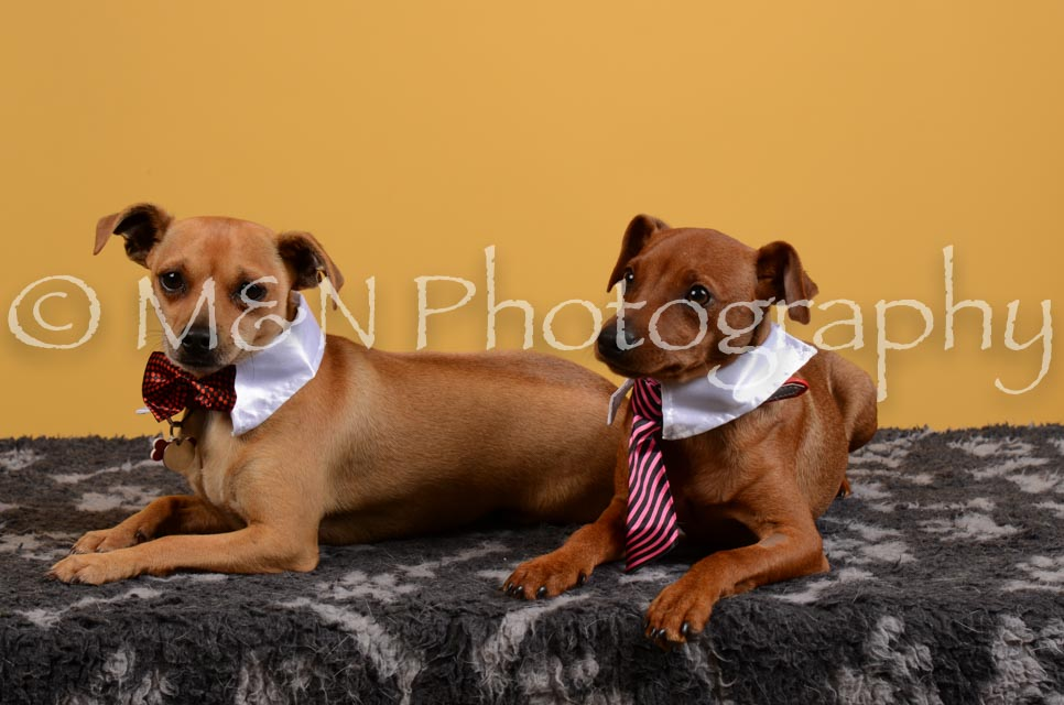 M&N Photography -DSC_4650
