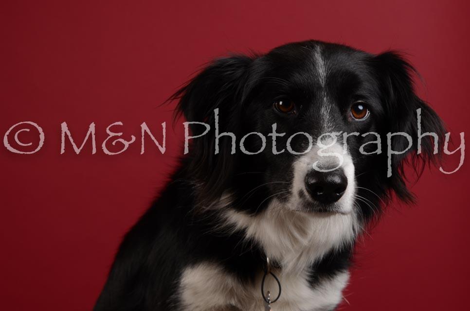 M&N Photography -DSC_3457