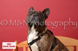 M&N Photography -M&N Photography-DSC_6640