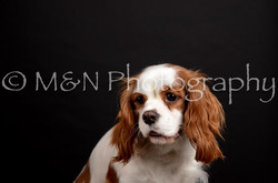 M&N Photography -DSC_5807