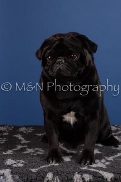 M&N Photography -DSC_5070
