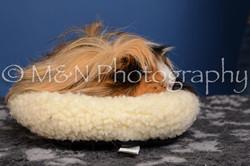 M&N Photography -DSC_5335