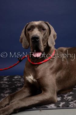 M&N Photography -IMG_4606