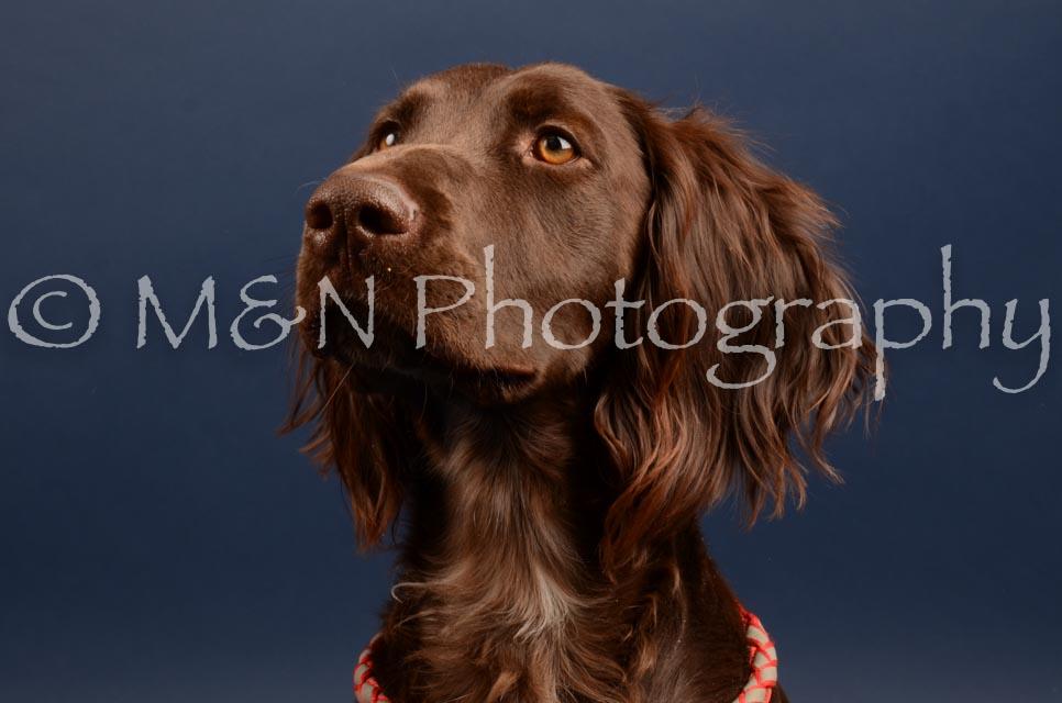 M&N Photography -DSC_4524
