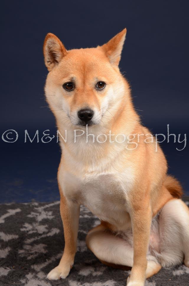 M&N Photography -DSC_0360