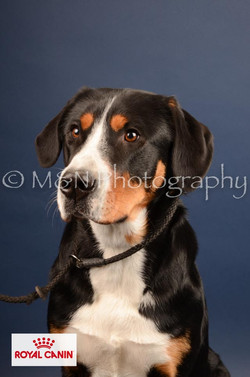 M&N Photography -DSC_4421-2