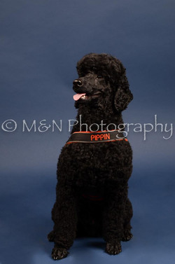 M&N Photography -DSC_3957