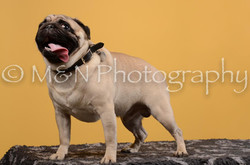 M&N Photography -DSC_4667