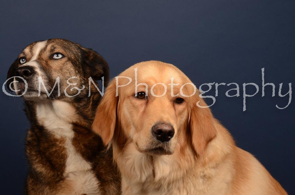 M&N Photography -DSC_4691