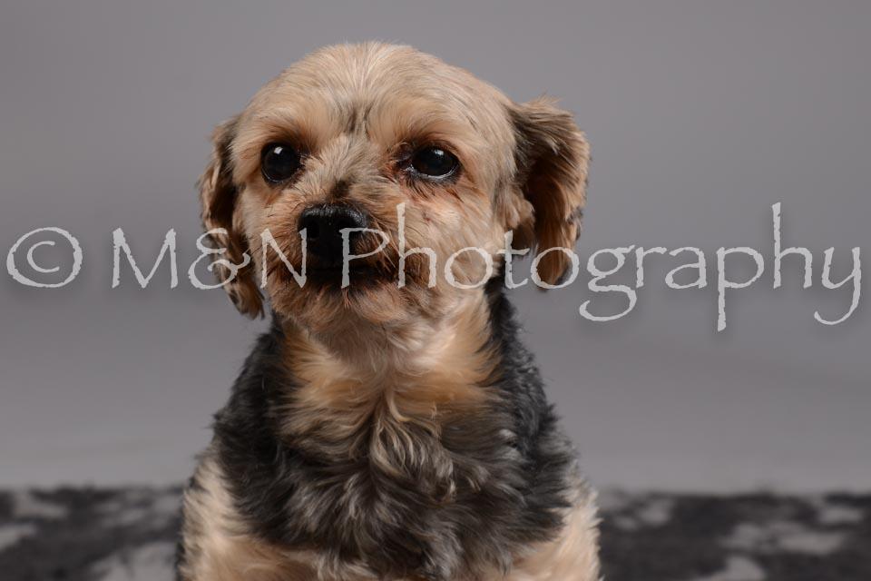 M&N Photography -DSC_1798