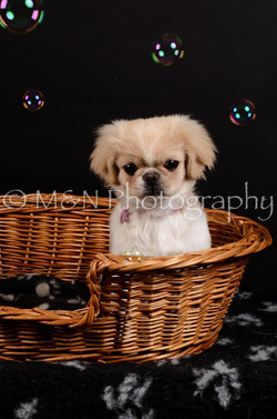 M&N Photography -DSC_6014