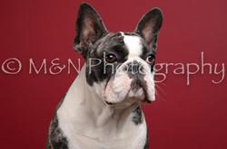 M&N Photography -DSC_3684