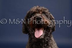 M&N Photography -DSC_0536