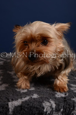 M&N Photography -DSC_4112