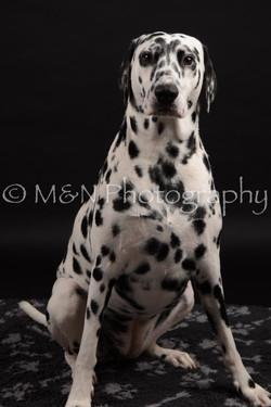 M&N Photography -DSC_9616