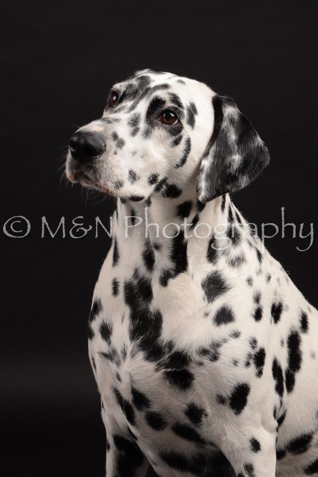 M&N Photography -DSC_9618