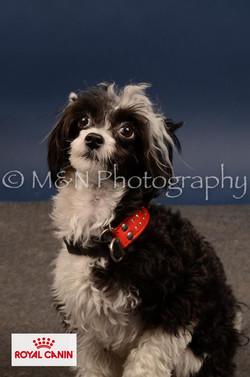 M&N Photography -DSC_4463-2