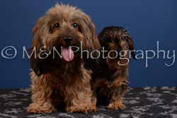 M&N Photography -DSC_5259