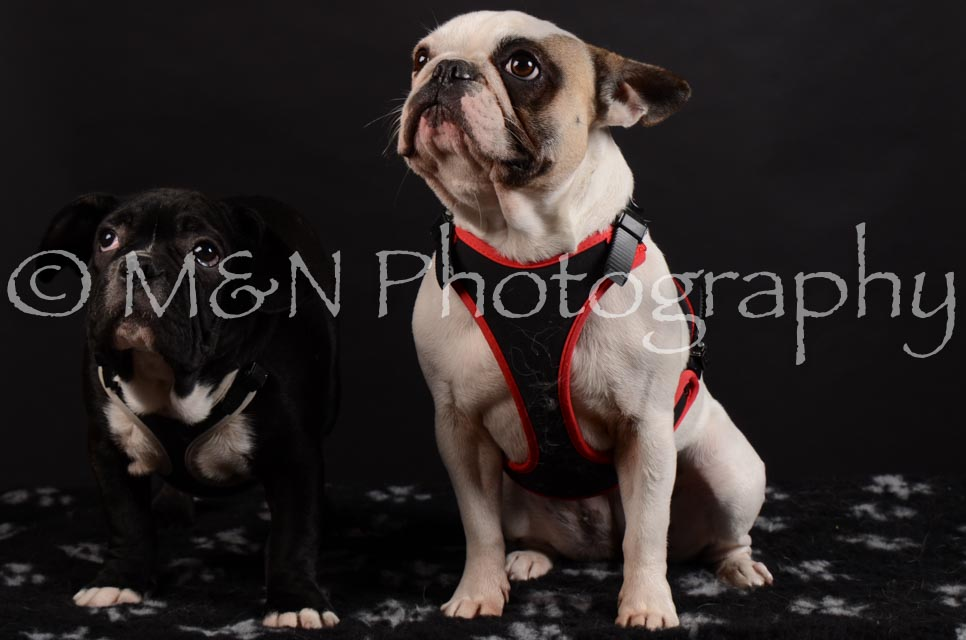 M&N Photography -DSC_5940