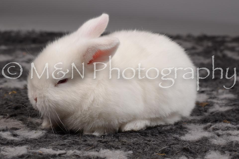 M&N Photography -DSC_1690