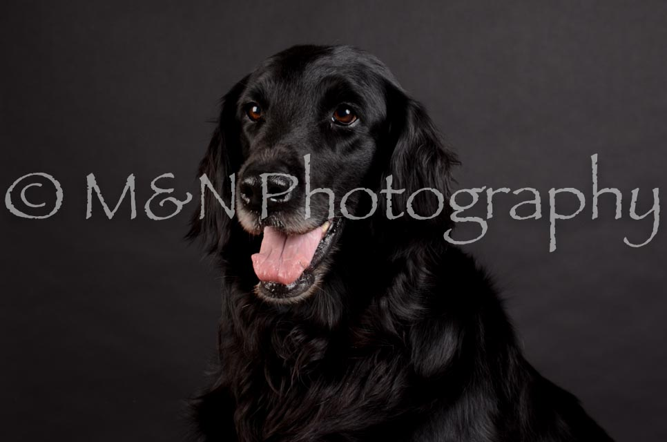 M&N Photography -DSC_5852