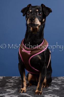 M&N Photography -DSC_5239