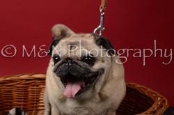 M&N Photography -DSC_6857