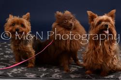M&N Photography -DSC_0421