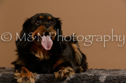 M&N Photography -_SNB0674