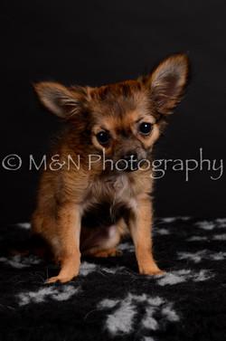 M&N Photography -DSC_5740