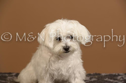 M&N Photography -_SNB0788