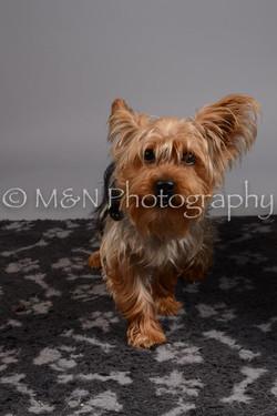M&N Photography -DSC_2629