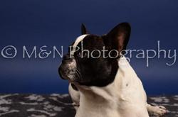 M&N Photography -IMG_4744