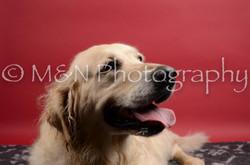 M&N Photography -DSC_8427