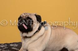 M&N Photography -DSC_4660