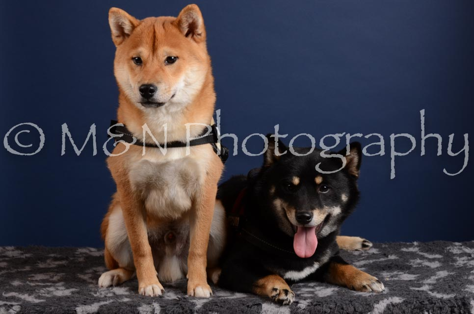 M&N Photography -DSC_4229
