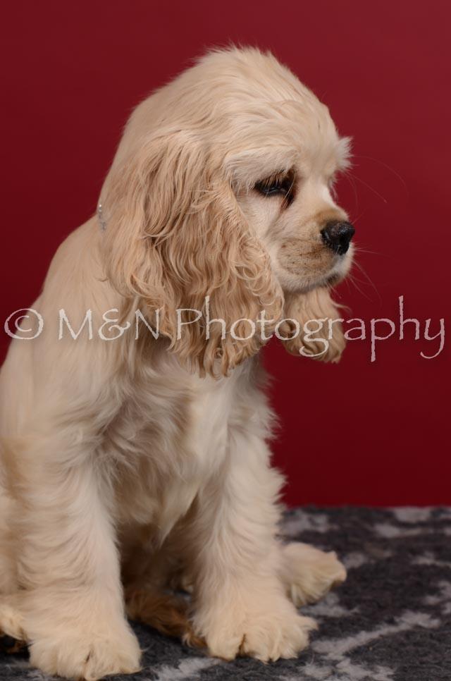 M&N Photography -DSC_3606
