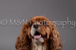 M&N Photography -DSC_1912
