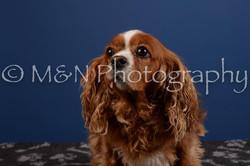 M&N Photography -DSC_5170