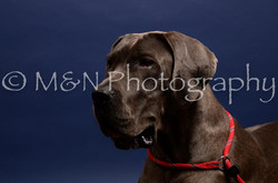 M&N Photography -IMG_4601
