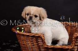 M&N Photography -DSC_6016