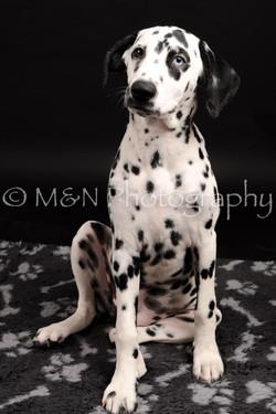 M&N Photography -DSC_9770