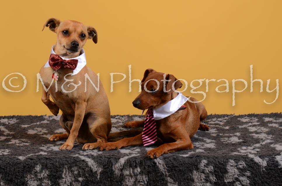 M&N Photography -DSC_4643