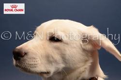 M&N Photography -DSC_4394-2