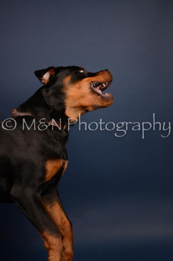 M&N Photography -DSC_3752