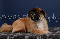 M&N Photography -DSC_4146